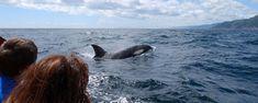 Cape Breton Nova Scotia Whale Watching Tours - Keltic Express Zodiac Adventures on the Cabot Trail, Ingonish, Cape Breton Island, Nova Scotia, Canada Cabot Trail, Whale Watching Tours, Cape Breton, Nova Scotia, The Places Youll Go, Zodiac, Bucket, Canada, Island