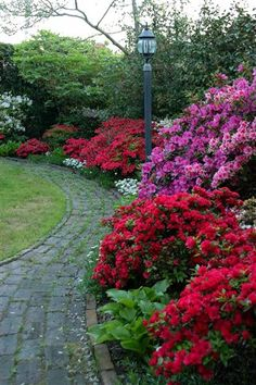 Azaleas!  Like the brick path.