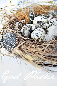 I haven hos Evigglade ♥: Rigtig god påske til alle