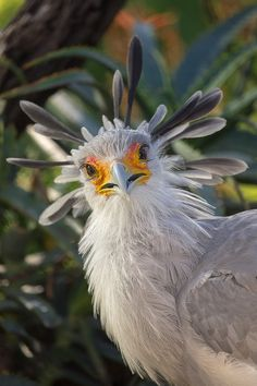 Secretary bird - Secretary Stare by Brian Connolly