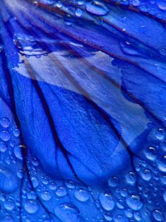 blue petal water droplets