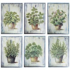 6 AROMATES wooden pictures in green 20 x 30cm