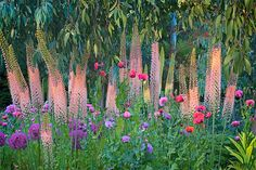 Eremurus (foxtail lilies), alliums, opium poppies and eucalyptus