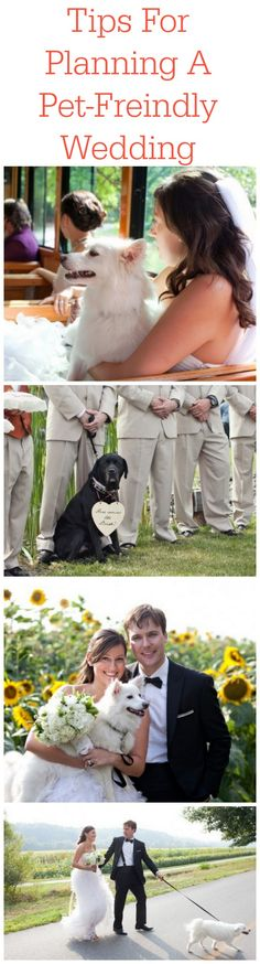 Tips For Planning A Pet-Friendly Wedding- I'm not so sure I would actually do this but just in case Dog Wedding, Wedding Advice, Wedding Planning Tips, Wedding Ceremony, Rustic Wedding, Dream Wedding, Wedding Day, Fantasy Wedding, Church Wedding