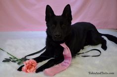 Search and Rescue Saturday is taking a week off to celebrate Valentine's Day. -- Tales and Tails