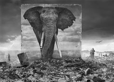 Nick Brandt places life-sized photos of Africa's vanishing lions elephants and rhinos in the landscape where they once thrived. Teaching Habitats, Nick Brandt, Technology Photos, Animal Magic, Art And Architecture, Architecture Graphics, Photo Series, Pet Portraits, Beautiful Creatures