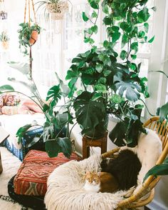 """""""Even though kitty can't go outside, she has her own little jungle to dwell in  #thesummersabode #jungalowpets #jungalowstyle #bohostyle #bohodecor…"""""""