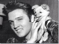 Elvis & Sweet Pea!