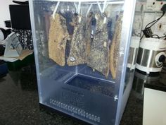 Leave the biltong to dry in a cool area that is not humid or damp Making Jerky, Biltong, The Settlers, Make Your Own, How To Make, Coriander Seeds, Venison, Spice Mixes, Step Guide