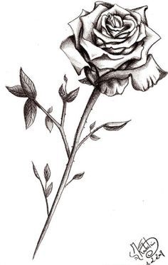 My rose for my baby
