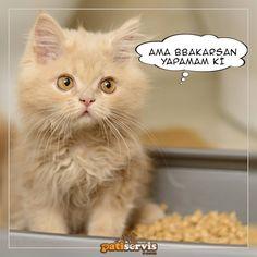 Kedilerin tuvalet alışkanlıkları doğuştan gelir. Minik dostlarınızın sağlığı için düzenli olarak kumlarını yenilemelisiniz. Tüm kedi kumu çeşitleri: patiservis.com/kedi-kumlari