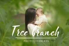 30 Tree branch photo overlays photoshop overlays png