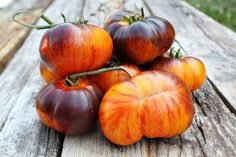 Alice's Dream - Graines de tomates - Heirloom TomatoEden Site
