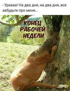 Russian Humor, Fractal Art, Good Mood, Say Hello, Life Hacks, Good Day, Jokes, Lol, Sayings