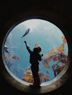 Aquarium adventures | VSCO Film