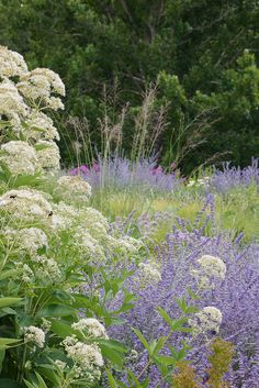 Jones Road: white valerian and Perovskia. Great substitute for spirea if you would like a smaller plant. Garden Landscape Design, Garden Landscaping, Flowers Perennials, Planting Flowers, Beautiful Gardens, Beautiful Flowers, Prairie Garden, Garden Borders, Natural Garden