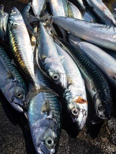 Summer in the southern coast of Norway filled with fishing, boat rides, crab races, leisure acivities and a recipe for seawater-poached salmon steaks. Norway Food, Heritage Recipe, Poached Salmon, Fish Art, Fish Dishes, Fly Fishing, Scandinavian, Seafood, Steak