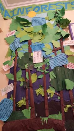 A geography display showing the four layers of the rainforest with lots of facts completed by the pupils