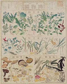 Chikuyou Hasegawa(長谷川 竹葉), illustrated plant chart: edible leaves , pungent herbs, mushrooms and seaweed, 1873 .