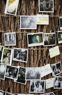 Wrap a tree or two with string lights and photographs to display memories. | 32 Totally Ingenious Ideas For An Outdoor Wedding