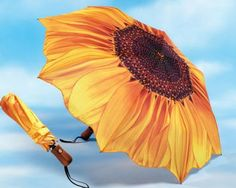 sunflower umbrella is >>>>>>