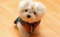 My dream puppy! Love pups so cute!
