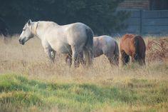 Horses Horses, Photography, Animals, Photograph, Animaux, Photography Business, Horse, Photoshoot, Animal