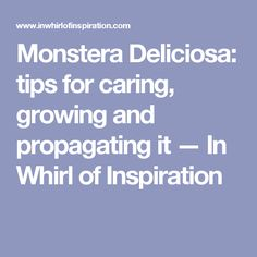 Monstera Deliciosa: tips for caring, growing and propagating it — In Whirl of Inspiration