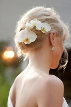 Orchids in an updo