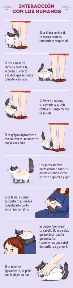 I Love Cats, Crazy Cats, Cute Cats, Funny Cats, Adorable Kittens, Cat Behavior, Behavior Plans, All About Cats, Cat Facts