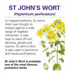 John's wort history is a bit interesting Healing Herbs, Medicinal Plants, Natural Healing, Healing Spells, Herbal Plants, Magic Herbs, Herbal Magic, Natural Medicine, Herbal Medicine
