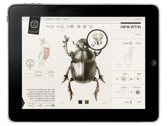 ✖✖✖ Insect Definer by Yael Cohen, via Behance ✖✖✖