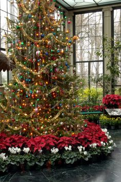 ~ Beautiful Christmas Tree in the Conservatory of Winterthur Gardens ~ Delaware ~ ♥ :)    gardenblog.winterthur.org