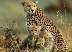 mama és babái