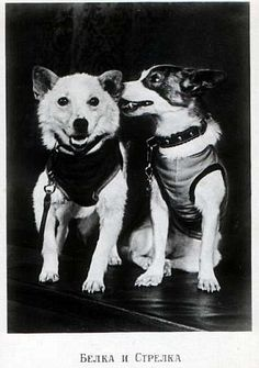 Belka, meaning squirrel (Left) and Strelka, meaning arrow, (right) managed returned to Ear...