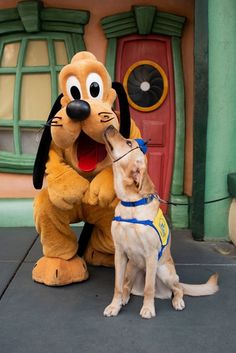 Adorable Dog Visits Disneyland And Meets All His Favorite Characters Animals And Pets, Baby Animals, Funny Animals, Cute Animals, Cute Dogs And Puppies, I Love Dogs, Doggies, Maltese Puppies, Terrier Puppies