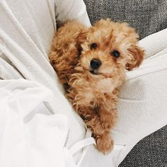 """205.8k Likes, 942 Comments - Jess Conte (@jessconte) on Instagram: """"throwback to when we first got milo  he's grown so much!! i think it's time to get milo a little…"""""""