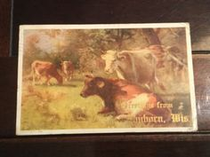 Greetings From Sanborn Wisconsin Antique Postcard Cows In Pasture Divided Back