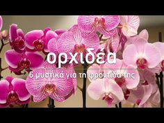 Orchid Plant Care, Orchid Plants, Orchids, Trees To Plant, Beautiful Landscapes, Seeds, Flowers, Laura Ashley, Youtube
