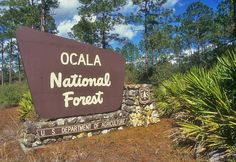 #Florida Staycations: The Ocala National Forest is hard to beat and there is no better kayak trip than a ride down the Juniper Springs Run.  #summer #adventure