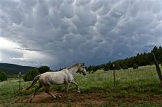 Traveler Photo Contest: Spontaneous Moments PHOTOGRAPH AND CAPTION BY DAVID HORN Holman, New Mexico A violent thunderstorm rolled up our valley from the great plains, bringing lightning, thunder and a sudden drop in air pressure. Our Spanish gelding was caught up in the moment and put on a show of speed and power.
