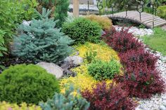 Nice color contrast gives this low maintenance garden the look of a flower garden.