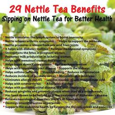 Benefits of Nettle Tea