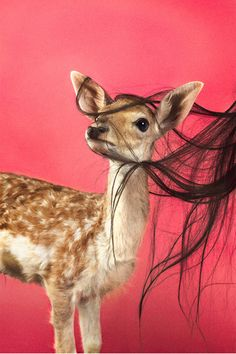 Ryan McGinley ライアン・マッギンレー 「Fawn (Fuchsia)」  2012, Courtesy of the artist and Team Gallery, New York