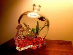 Image result for glass skull fish tank