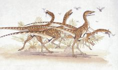 A herd of Saltopuses chasing insects. The new study identifies Saltopus as the closest thing in the fossil record to what the hypothetical common ancestor might look like. Illustration: Dea Picture Library/Getty Images/DeAgostini