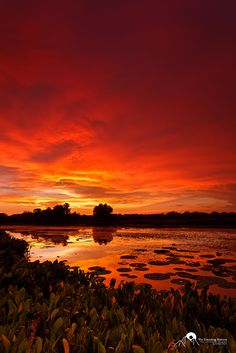 Red Sky at Night... A spectacular sunset over the wetland in Brazos Bend State Park in Texas.