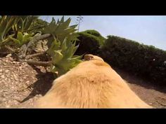 A Dog's View Of Running Full Speed To His Favorite Place!