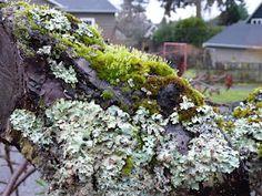 Favorite Mossy Tree 1