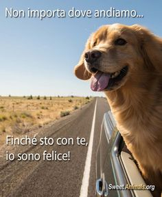 #cani #dogs #goldenretriever #citazioni Cute Cats And Dogs, Animals And Pets, Baby Animals, Funny Animals, Cute Animals, Hog Dog, Dog Cat, Love Pet, I Love Dogs